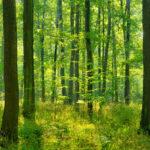 bosco 2
